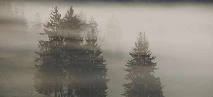Pâturage boisé dans la brume, Les Jordans, vallée de La Brévine. Photo: Patricia Huguenin.