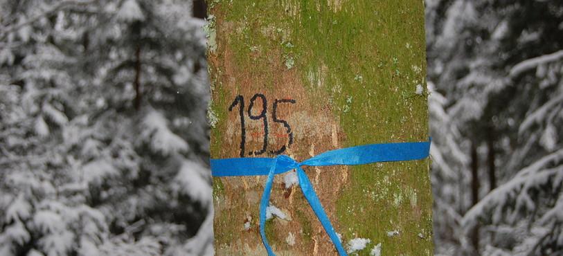 Un arbre marqué.