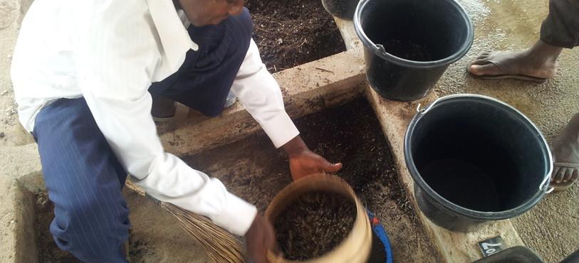 Tamisage des larves au Mali