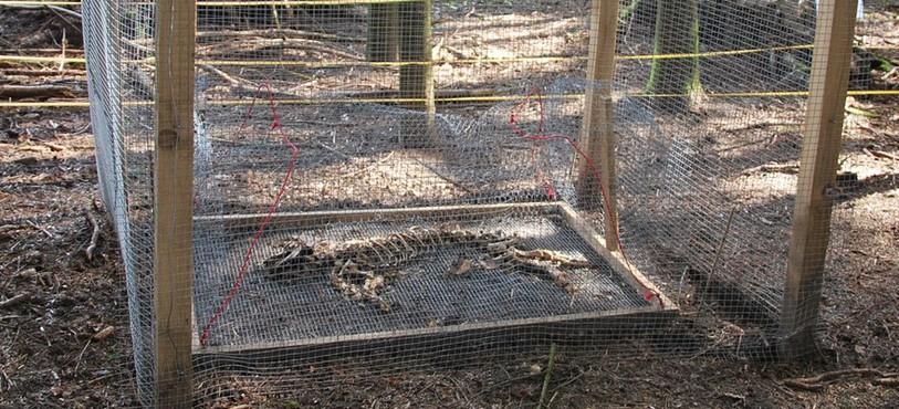 La cage grillagée vise à éviter les visites de prédateurs affamés.