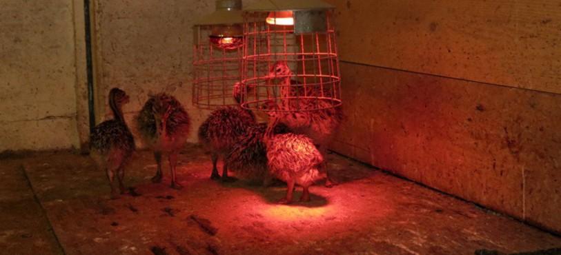 Petits sous la lampe