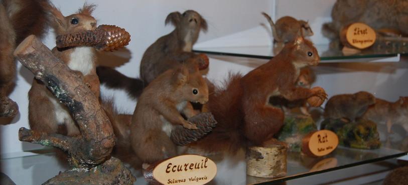 Un écureuil du Musée de la Banderette.