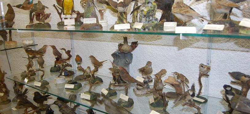 Le Musée de la Banderette compte de nombreux animaux empaillés.
