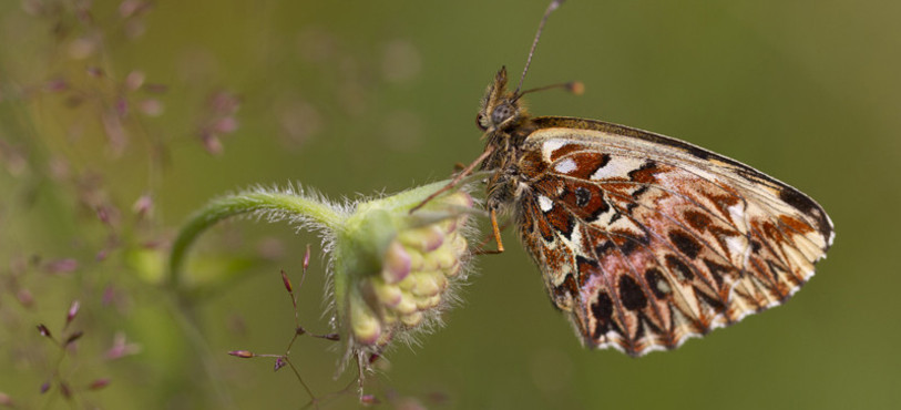 Insecte - Photo : Ambroise Marchand