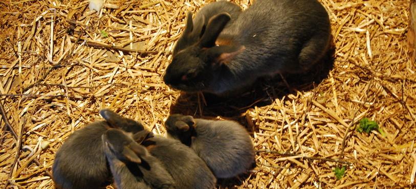 Pour Pâques, de véritables lapins étaient également présents.
