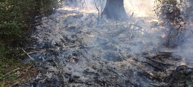 Feux de forêts entre Prêles et La Neuveville