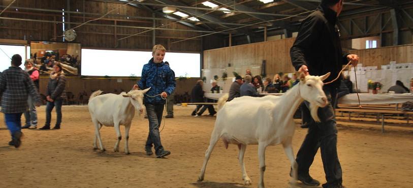 La 34e édition du Marché-Concours de menu bétail à Tavannes.