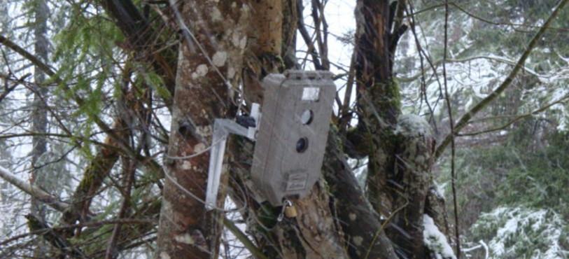 Un des nombreux appareils photo destinés à pièger le lynx