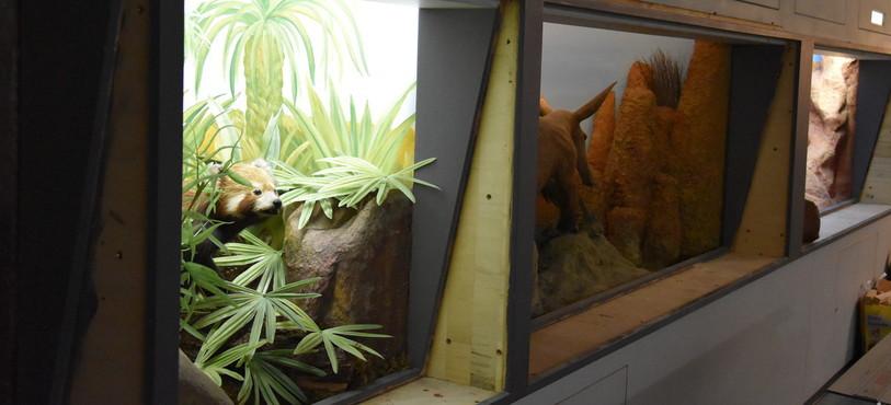 Les vitres des dioramas ont été enlevées pour permettre le démontage de l'exposition.