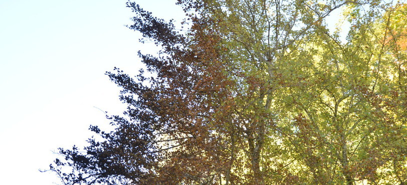 L'arbre juste à côté de la place de jeux du collège de Vauvilliers à Boudry a également été touché par les flammes