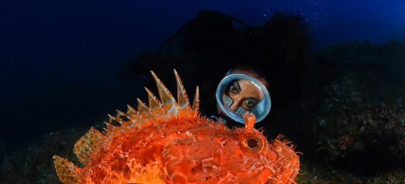 La plongeuse et le poisson scorpion en méditerranée.