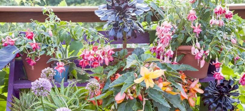Oser l'étagère à plantes colorée (detentejardin.com)