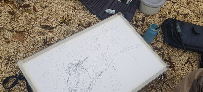 Illustrations de la P'tite Vadrouille : Laurent Willenegger