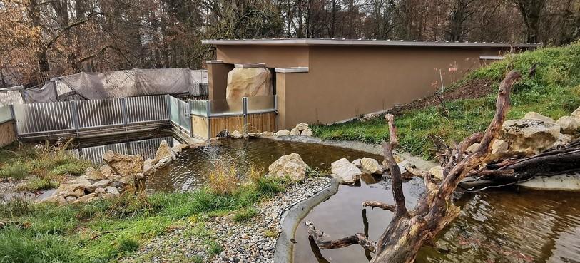 Le nouvel habitat des loutres cendrées au Bois du Petit-Château. Photo : David Guerra