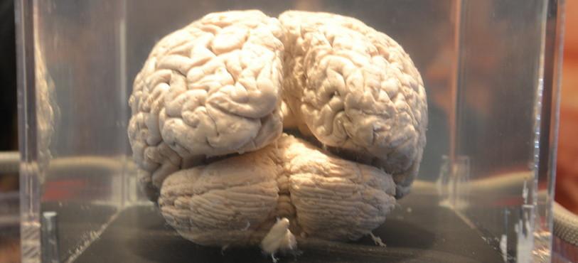 Brain Bus 2012