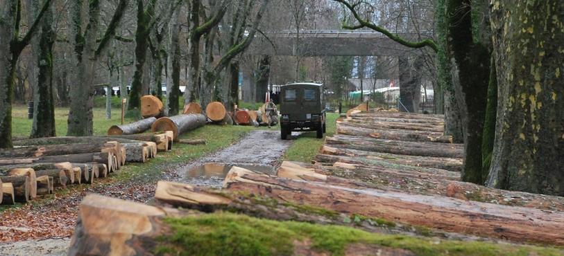 Vente de bois précieux à Colombier