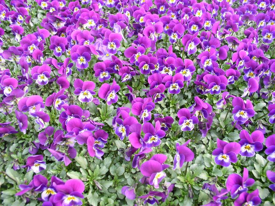 jardins de printemps rtn votre radio r233gionale